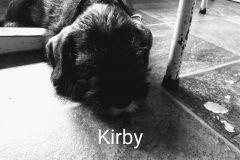 Kirby-31-5-2020-2