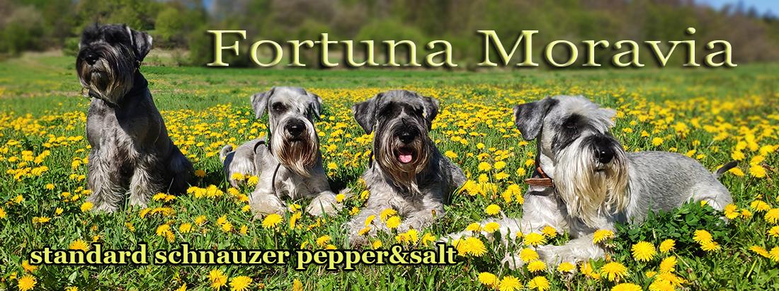 Fortuna Moravia